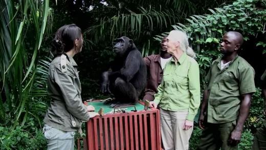 L'incroyable geste de remerciement de Wounda à Jane Goodall