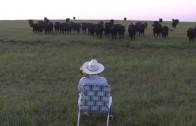 La sérénade du bétail avec mon trombone