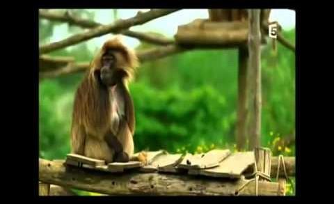 Laila del Monte – Communication avec les animaux